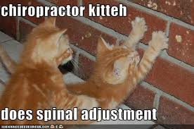 Kitten Chiropractic Continuing Education