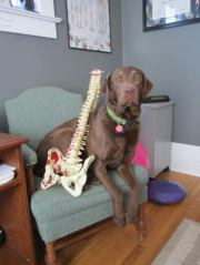 Dog Chiropractic Spine