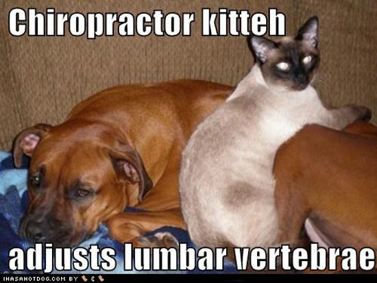 Funny Animal Chiropractic Continuing Education